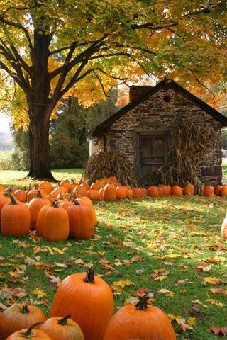 Pumpkins, corn stalks, and autumn leaves