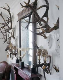 antlers!