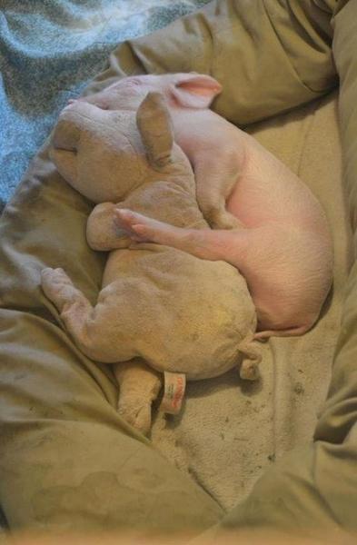 Spooning Piggie